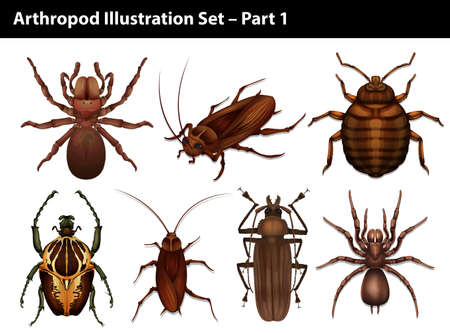 Set of insects on a white background Vector