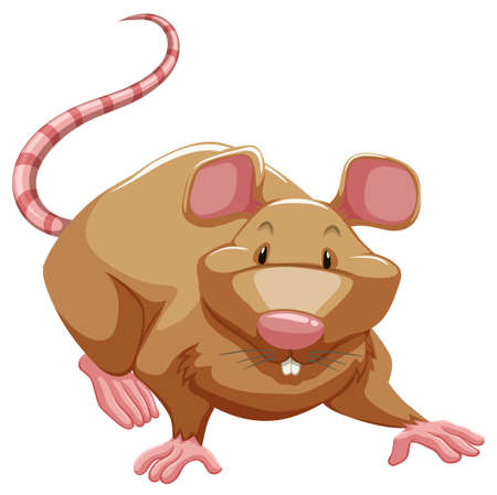 Playful brown rat on a white background