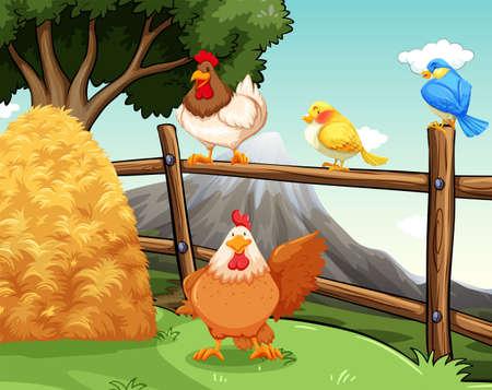 animal cock: Gli animali della fattoria vicino il fieno e la recinzione