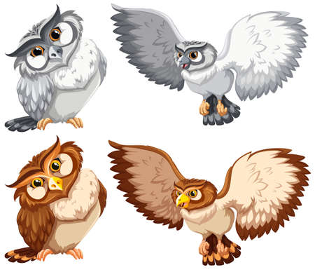 wild living: Set of owls in grey and brown color Illustration