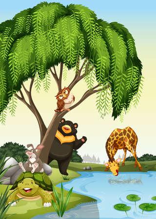 wild living: Wild animals besides a river