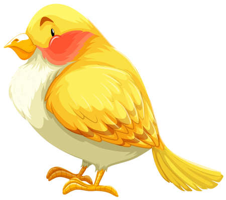 Flashcard of a yellow and white bird Vector