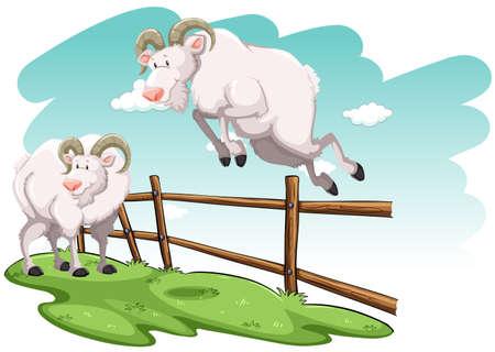 salto de valla: Blanco saltando de cabra encima de la valla