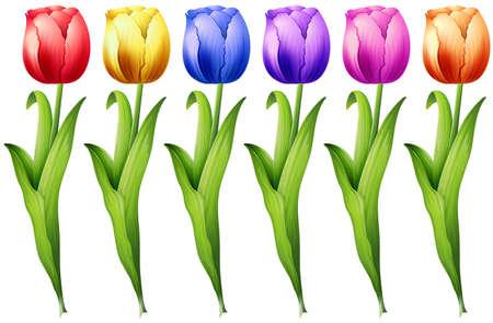tulips isolated on white background: Set of colorful tulip flowers Illustration