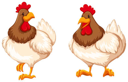 Two chickens on white background