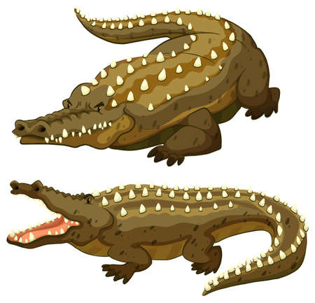 enormous: Two huge crocodiles on white background