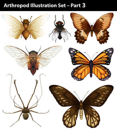 Diferrent species of arthropods on white background Vector