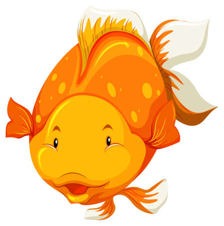 golden fish: Front view of a chubby golden fish