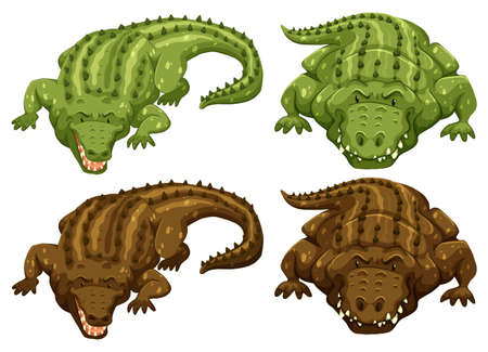 wild living: Set of four crocodiles in green and brown color