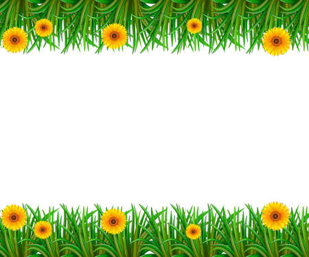 grasses: White background with sunflower and grasses frame