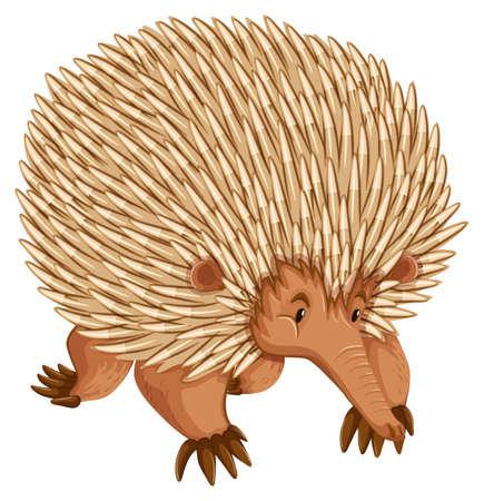 A borwn porcupine on white backbround Vector