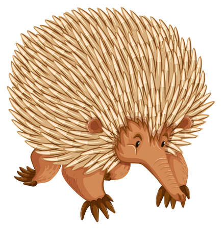 anteater: A borwn porcupine on white backbround
