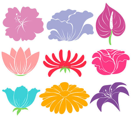 Different flowers sample on white background Vector