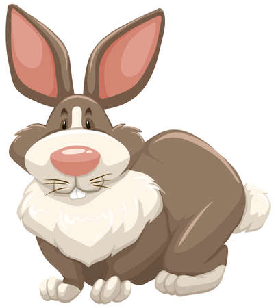 brown: White and brown rabbit sitting