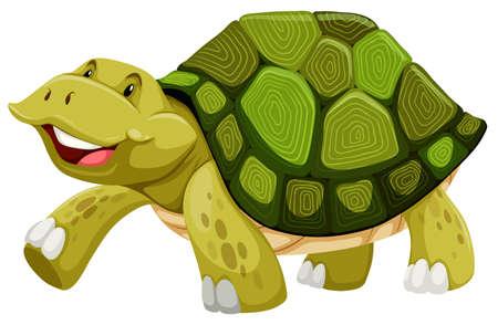green turtle: Tartaruga verde su sfondo bianco