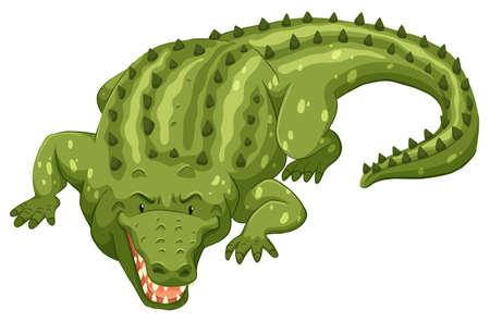 cartoon crocodile: Green crocodile on white background Illustration