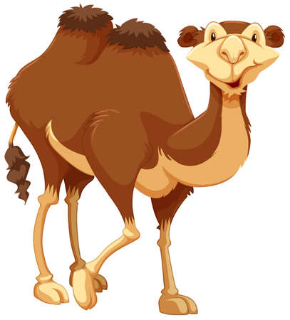 humps: Cute camel on white background