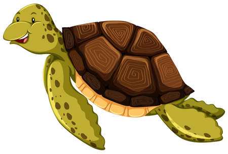 Cute turtle on white background