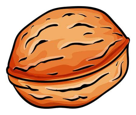 close up food: Huge hard brown nut illustration