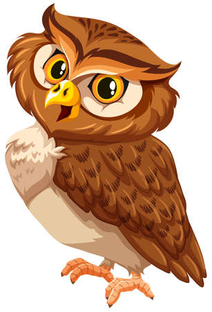 smile close up: Brown owl on a white background