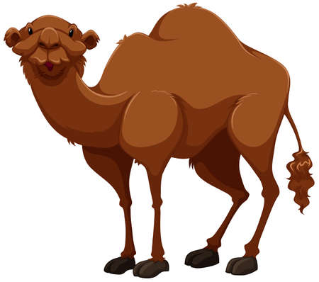 humps: Brown camel on white background