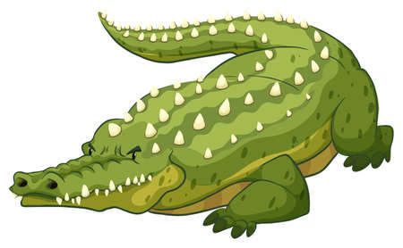on white background: Green crocodile on white background Illustration
