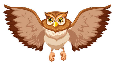 brow: Brow owl with open wings