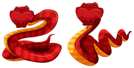 hiss: Two red and yellow snakes on white background Illustration