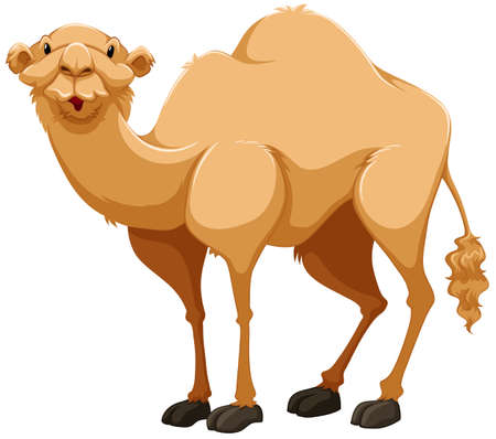 cartoon camel: Light brown camel on white background