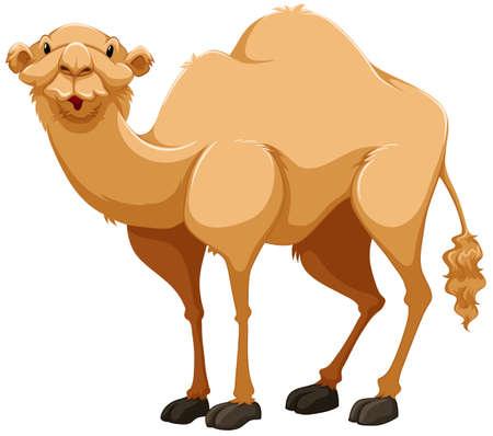 Luce marrone cammello su sfondo bianco