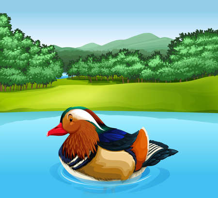 anatidae: Poster of a Mandarin duck swimming in a river