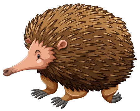 echidna: A side view of a brown echidna