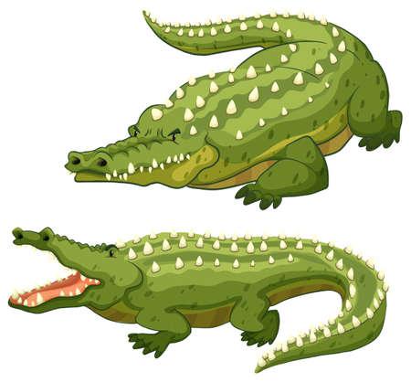 cartoon crocodile: Two green crocodiles on white background
