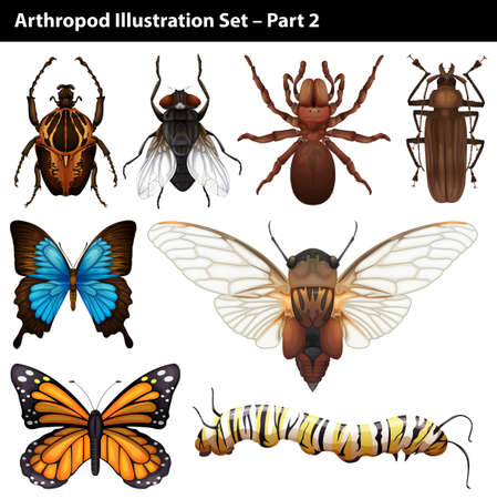 butterfly background: Arthropods illustration set part two