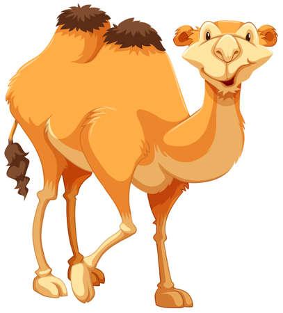 camello: Caminando camello marrón sobre fondo blanco Vectores