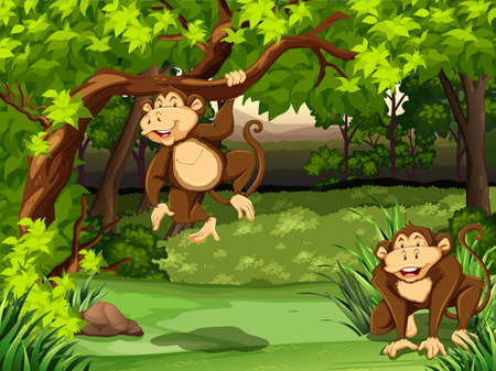 dark forest: Two monkeys sitting in a jungle Illustration