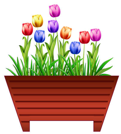 yellow flower: Pot of colorful tulip flowers Illustration