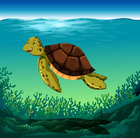 sea creature: Sea turtle swimming under the sea
