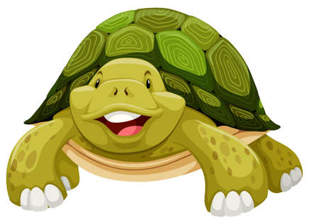 land mammals: Green turtle smiling on white background