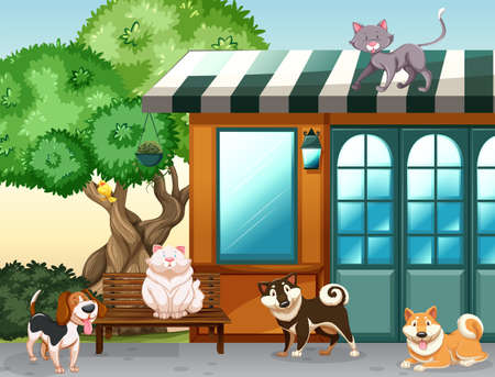 house cat: Cute pets outside the house