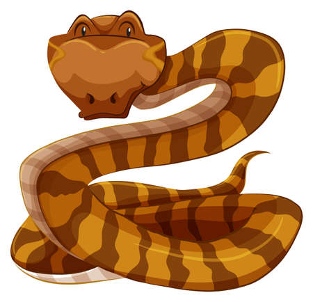 hiss: Brown snake on a white background Illustration