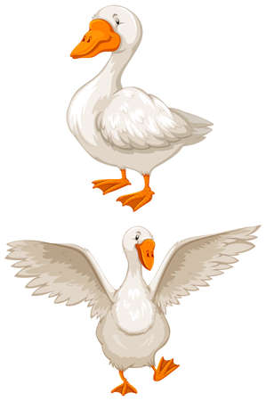 Two white geese on white background Illustration