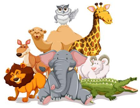 Groep van wilde dieren op een witte achtergrond