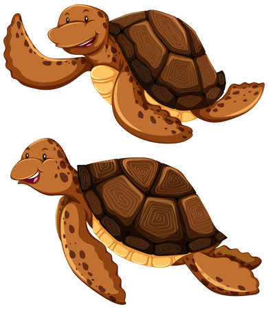 cartoon land: Two brown turtles on white background