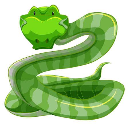 hiss: Green snake on white background
