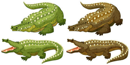 alligator isolated: Set of green and brown crocodiles