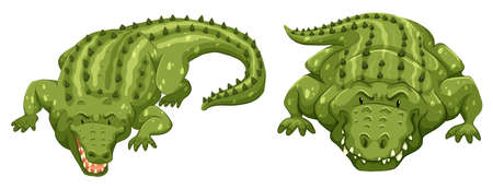eater: Two green crocodiles on white background