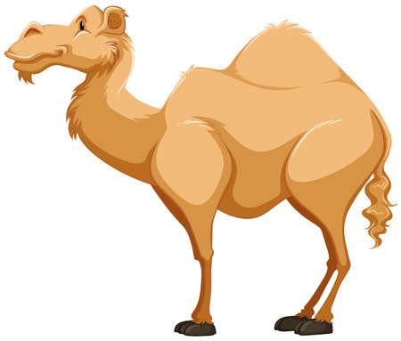 cartoon camel: Side view of a camel on white background