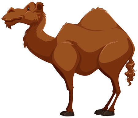 humps: Side view of a dark brown camel