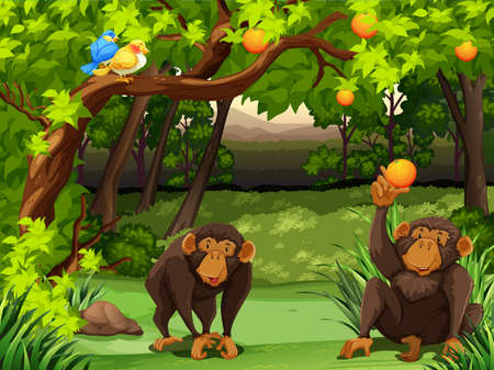 orange tree: Two monkies sitting under orange tree